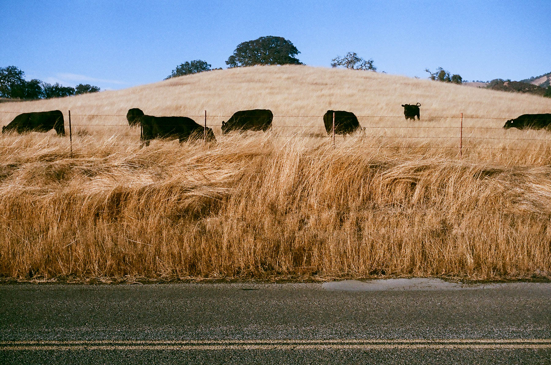 Leica M2 Carmel Valley Road 2016-12020007